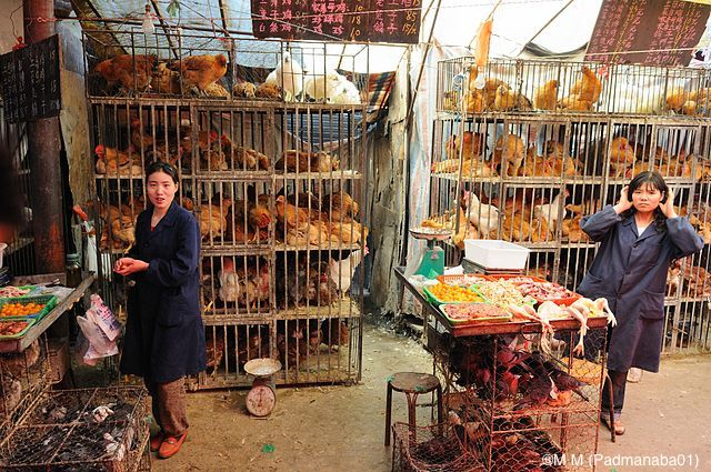 influenza-aviaire-marche-volailles-Chine
