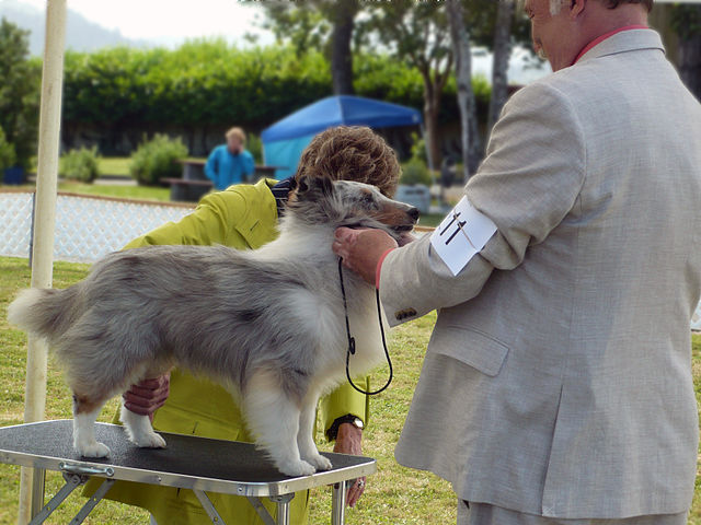 centrale canine confirmation 2015