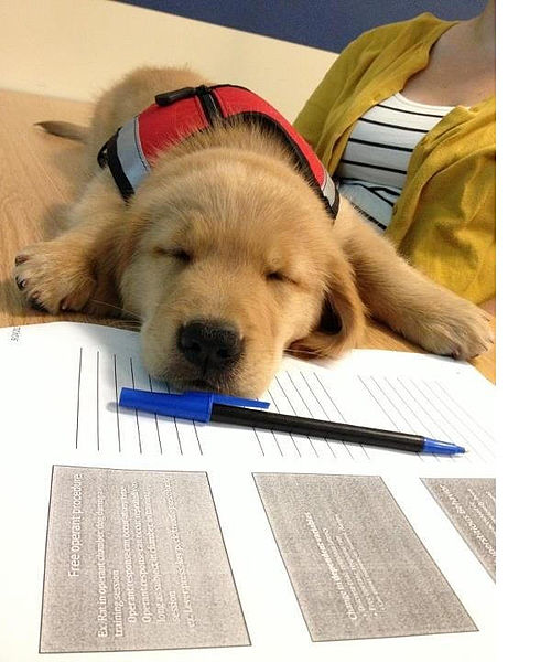 Education canine