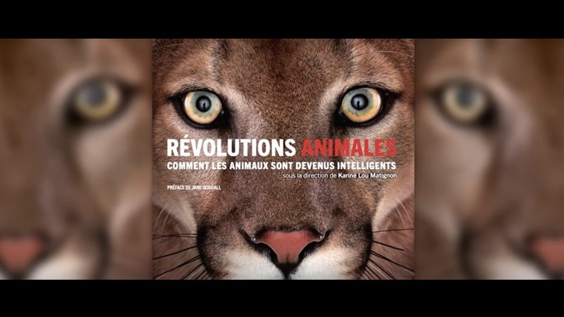 revolutions-animales-condition-animale